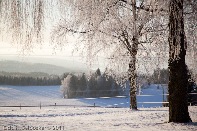 Utsikt mot Mjøsa - Ringsaker