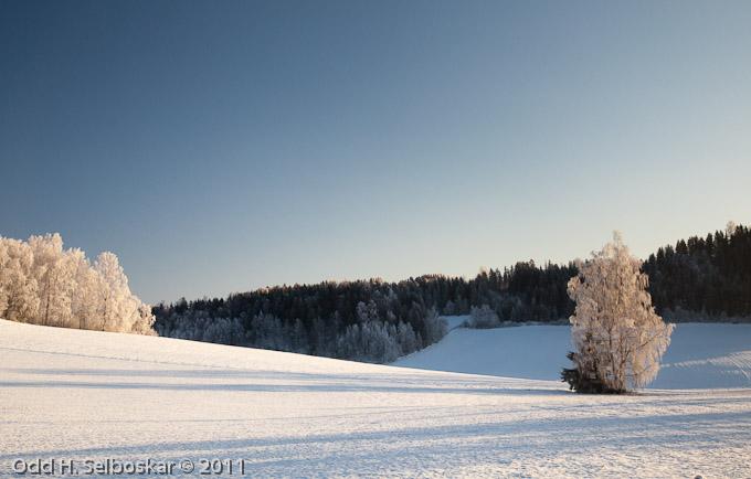 Vinterjorde - Ringsaker