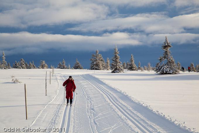 Skispor ved Elgåsen - Sjusjøen