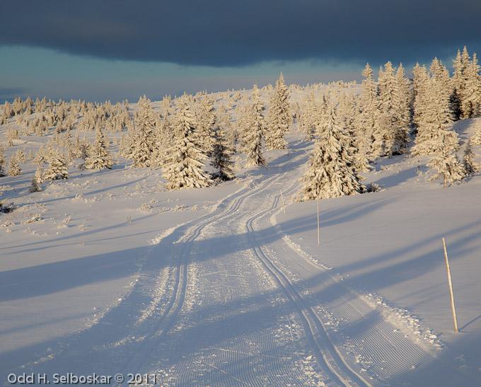 Skispor i vinterskog - Elgåsen, Sjusjøen